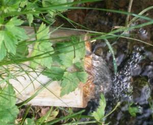 b amboe en stromen nieuw Nico voor Bestuur, stromen van gedachten als water._.uit de bron